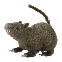 Szőrös patkány 21 cm