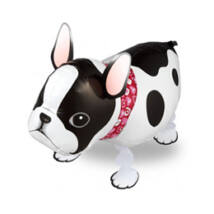 Sétáló Francia Bulldog Lufi